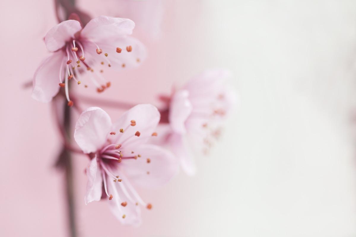 spring-2854205_1920