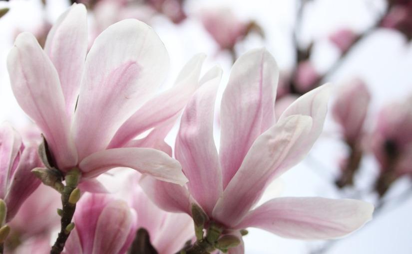 3 Spring Break Secrets forParents