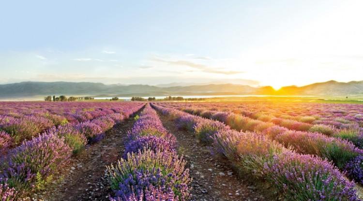 young-living-lavender-farm-mona-utah-1038x576